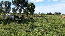 Fazenda Bocaína/ NOSSA SENHORA APARECIDA 90,00HA Município de João Pinheiro-MG