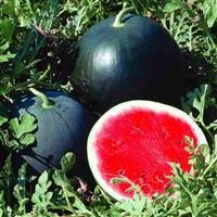 compro e vendo melancia