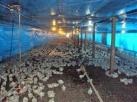 Fazenda com aviário Jussara - Paraná