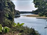 FAZENDA A VENDA - 253 hectares - MARTINHO CAMPOS (MG)