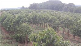 FAZENDA - 677 hectares - REGIÃO VARGINHA (MG)