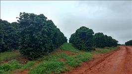 FAZENDA - 1.700 hectares - REGIÃO NEPOMUCENO (MG)