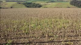 FAZENDA - 198,44 hectares - SACRAMENTO (MG)