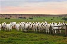 Carta de credito para fazendas