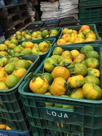 Pokan , mexerica , tomate , Pitaya , legumes ,verduras e frutas  em geral