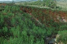Mudas Espécie nativa do Cerrado