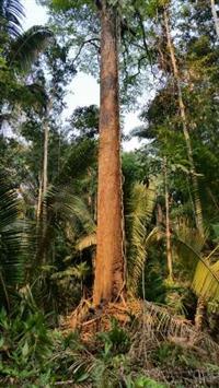 FAZENDA DE 10 MIL HECTARES NO SUL DO AMAZONAS