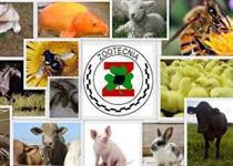 nutrição e produção de todas as especies de animais de produçao
