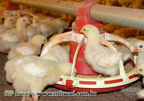 Óleo Degomado para nutrição animal
