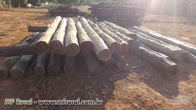 madeira de acapu a aroeira do para