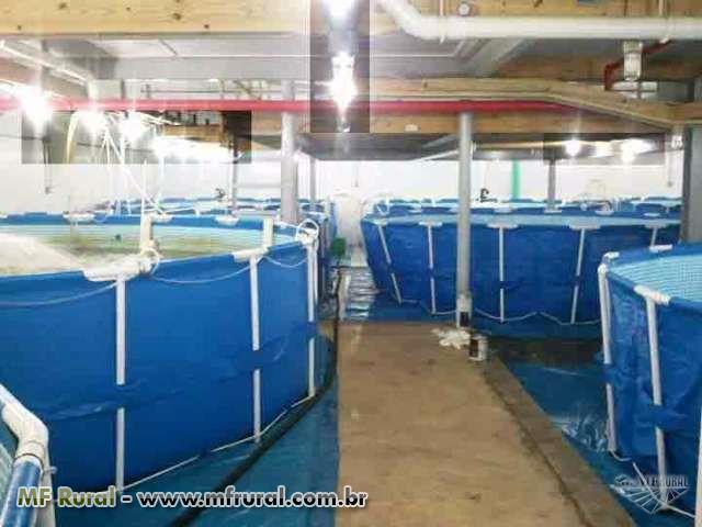 Centro de Distribuição de Alevinos enviamos para todo o Brasil