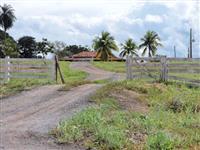Fazenda Funil - Buritinópolis à venda.