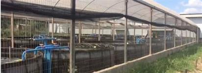 Sistema para produção de peixes