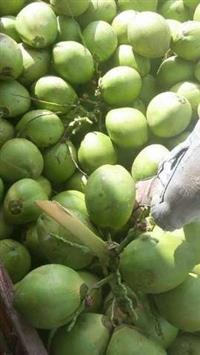 coco verde mas 35495987