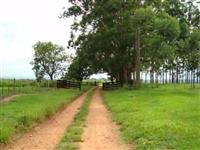 Fazenda para soja, cana, laranja, pecuária, interior de são Paulo, Echaporã, Marília, Assis, platina