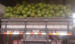 Vendo Coco Verde 100% Anão