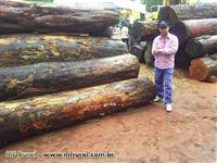 Compro Madeira Certificada