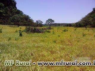 Parceiro/Investidor para desenvolvimento de Atividade Agrícola no Estado do Tocantins