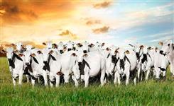 Crédito Imóvel Rural/ Urbano - Implementos Agrícolas - Caminhões - Utilitários