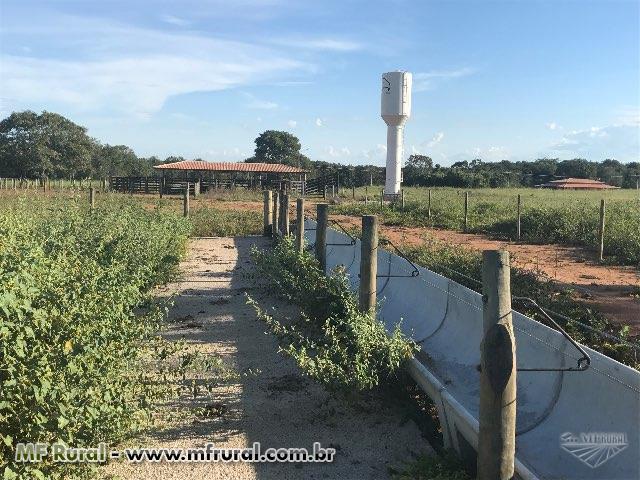 Fazenda Top 112 Alq- Formoso do Araguaia- TO