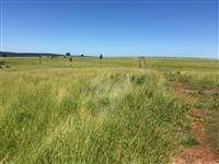Fazenda de 100 Alqueires  BOFETE - R$ 55.000,00 por alqueire - preparada para pecuária