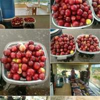 Camu camu frutas