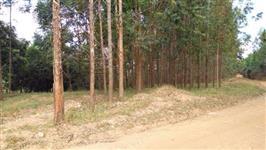 Vendo Floresta de Eucalipto de 5 anos
