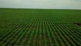Procuro Fazendas em MT para investimento com dividas direto com o proprietario e com boa localização