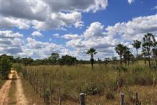 Procuro plantador de soja para Aroazes Piaui