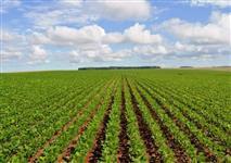 Procuro arrendamento 60 a 120 ha, cultivo de grãos, região de Cristalina/GO ou Alto Paranaíba/MG