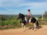 Cavalo mangalarga marchador