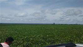 fazendas de soja