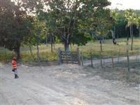 FAZENDA PARANTHAM - FICA A 12 KM DO CENTRO DO MUNICÍPIO DE  CATU - BAHIA