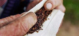 PROCURO Mão de obra - Enrolar Cigarro de Palha