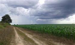 Venda Fazenda em Colinas do Tocantins, são 282 alqueirões ou 1364 hectares. Preço: RS 27.000,00/ alq