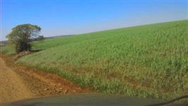Sítio com granja de frangos em Marilândia do Sul - PR por 2.650.000