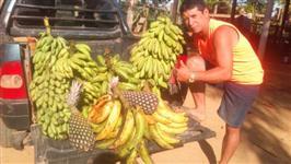 Banana pacovan