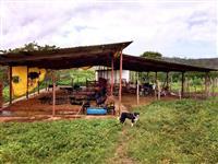 Vende-se ou arrenda-se fazenda de 750 tarefas em Itaporanga D'Ajuda