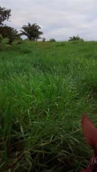 Fazenda de 1.600 hectares com 700 desmatado