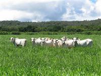 Vende-Se Fazenda 320 há localizada na região do MA.TO.PI.BA