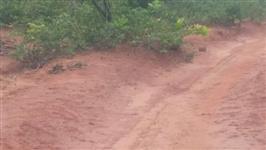 Fazenda para Agricultura/Pecuária no Sul do MA.