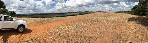 Fazenda em Tibagi - PR