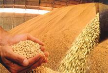 Compro Soja GMO , Farelo de Soja