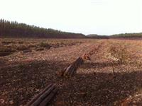fazenda 574,48 hectares , 45 km de campo grande ms