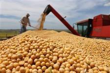 Procuro fornecedor de soja (grãos)