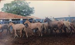 Mulas e Burros