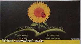 PLANTAMOS ÁREA DE MANDIOCA PARA VENDA E ATENDER EMPACOTADORAS.