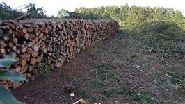 Pinus/eucalipto/acácia negra