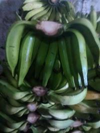 Banana da terra extra
