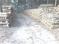 Compramos Plantação de Eucalipto e Toras  no Estado de São Paulo